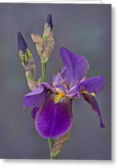 Water Drop Greeting Cards - Iris and Company Greeting Card by Susan Candelario