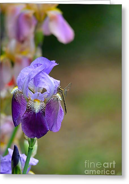 Iris Germanica Greeting Cards - Iris and the Dragonfly 1 Greeting Card by Jai Johnson
