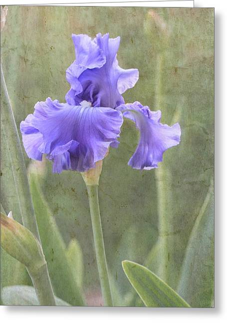 Texture Floral Greeting Cards - Iris Greeting Card by Angie Vogel