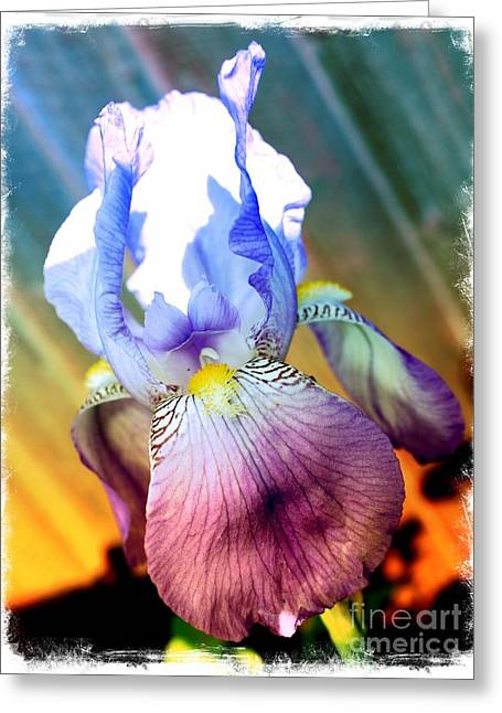 Iris Digital Art Greeting Cards - Iris Drama Greeting Card by Carol Groenen