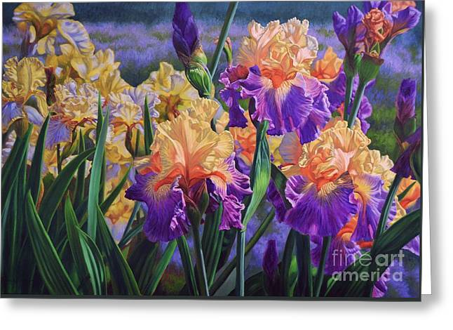 Bearded Iris Greeting Cards - Iris Garden 1 Greeting Card by Fiona Craig