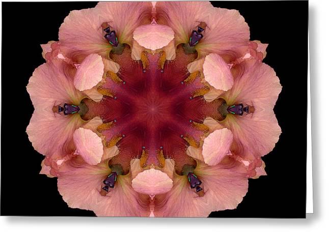 David J Bookbinder Greeting Cards - Iris Germanica Flower Mandala Greeting Card by David J Bookbinder