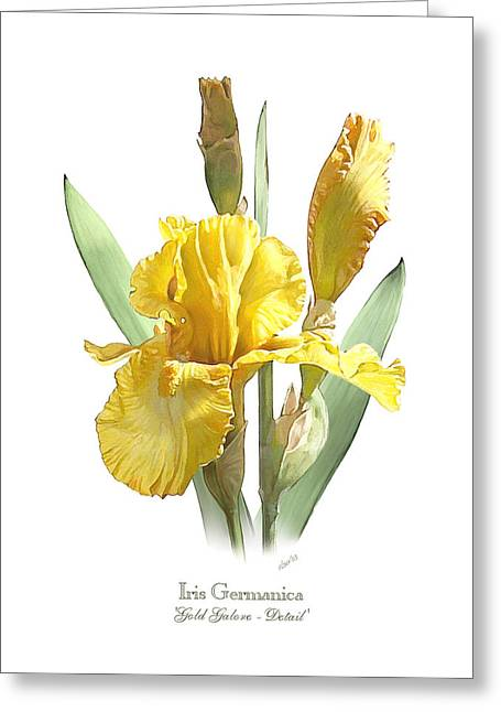Iris Germanica Gold Galore Greeting Card by Artellus Artworks