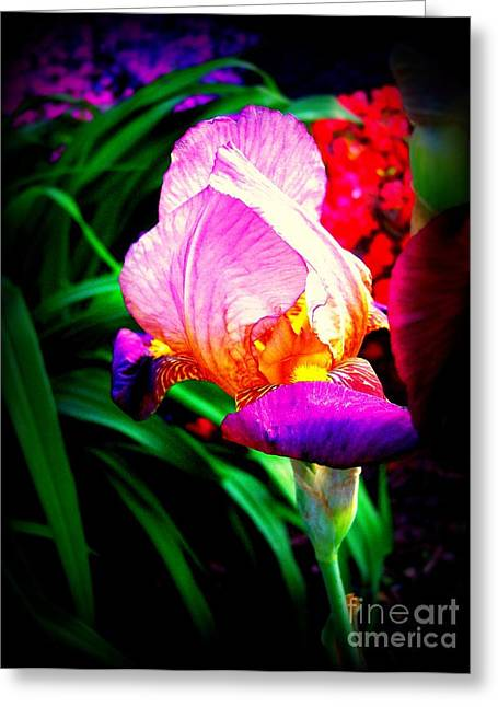 Flora And Fauna Greeting Cards - Iris glow Greeting Card by Janine Riley