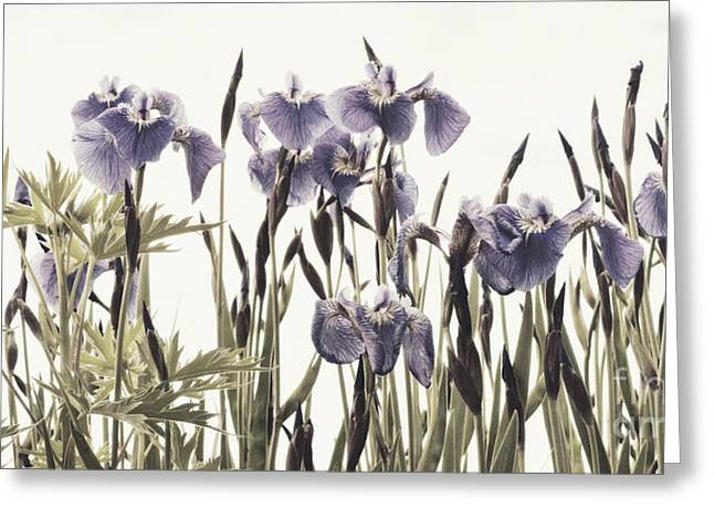 Blume Greeting Cards - Iris In The Park Greeting Card by Priska Wettstein