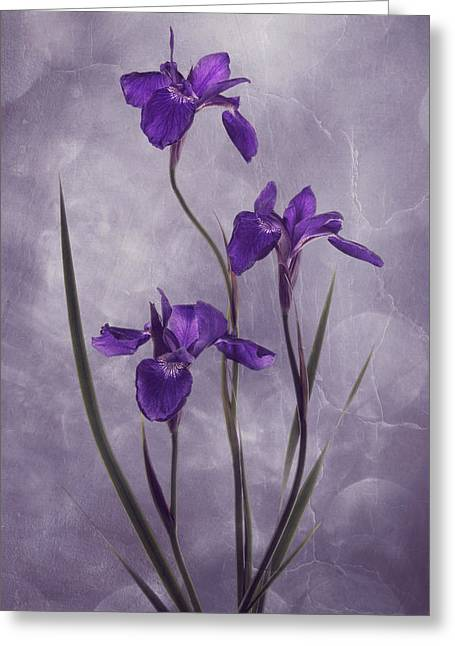 Flower Blossom Greeting Cards - Iris Inspiration Greeting Card by Leda Robertson