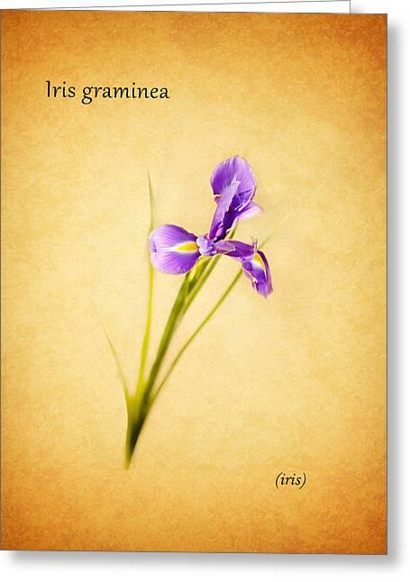 Purple Roses Greeting Cards - Iris Greeting Card by Mark Rogan