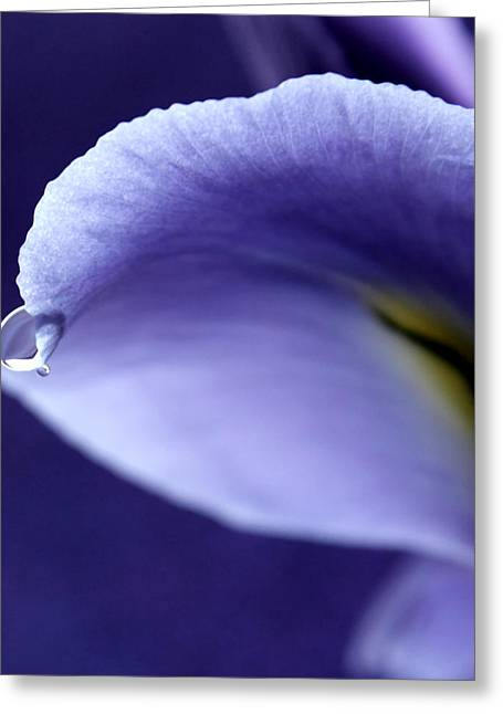 Iris Rain Greeting Card by Krissy Katsimbras