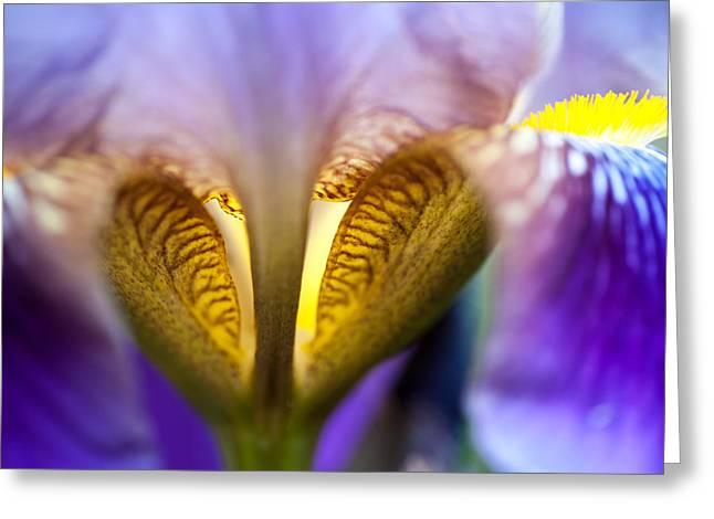 Garden Flower Vision Greeting Cards - Iris Secret Life. Macro Greeting Card by Jenny Rainbow