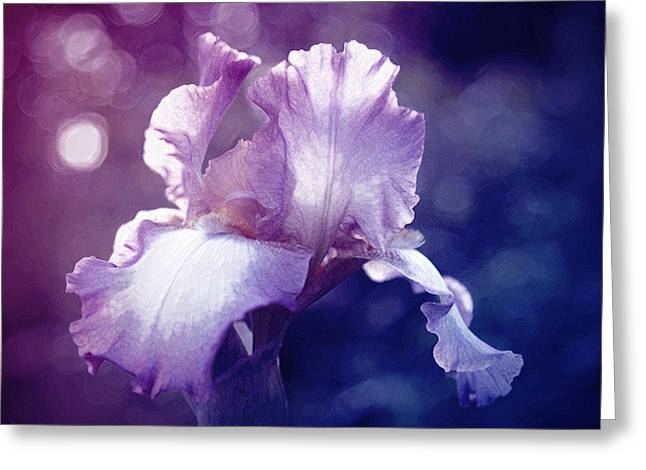 Floral Photographs Greeting Cards - Iris shades of purple Greeting Card by Toni Hopper
