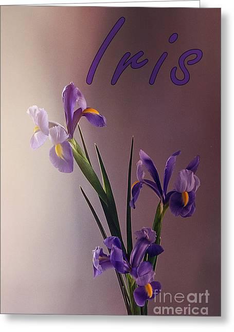 Flower Still Life Prints Greeting Cards - Iris Greeting Card by Sharon Elliott