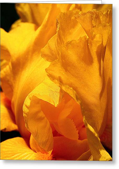 Flora Art Greeting Cards - Iris Undulation Greeting Card by Rona Black