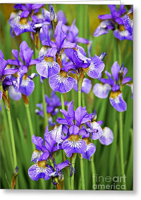 Irises Greeting Card by Elena Elisseeva