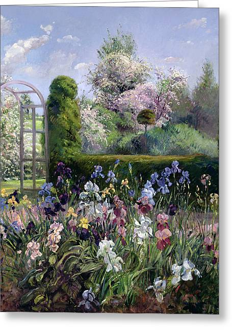 Gladiolus Greeting Cards - Irises In The Formal Gardens, 1993 Greeting Card by Timothy Easton