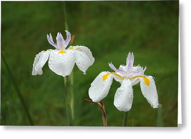 Petals With Droplets Greeting Cards - Irises In the Rain Greeting Card by Linda Brody
