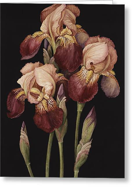 Tasteful Greeting Cards - Irises Greeting Card by Jenny Barron