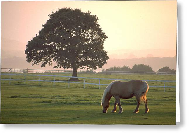 Gloaming Greeting Cards - Irish Horse grazes in the Gloaming Greeting Card by Carl Purcell