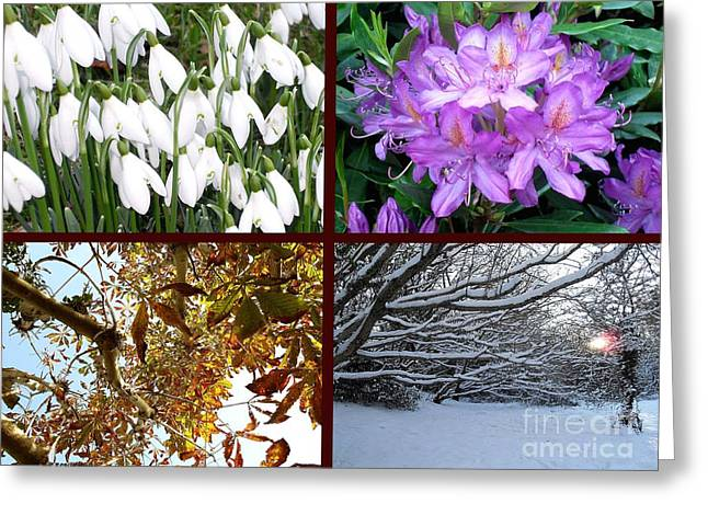 Tree Art Print Mixed Media Greeting Cards - Irish Seasons Greeting Card by Patrick J Murphy