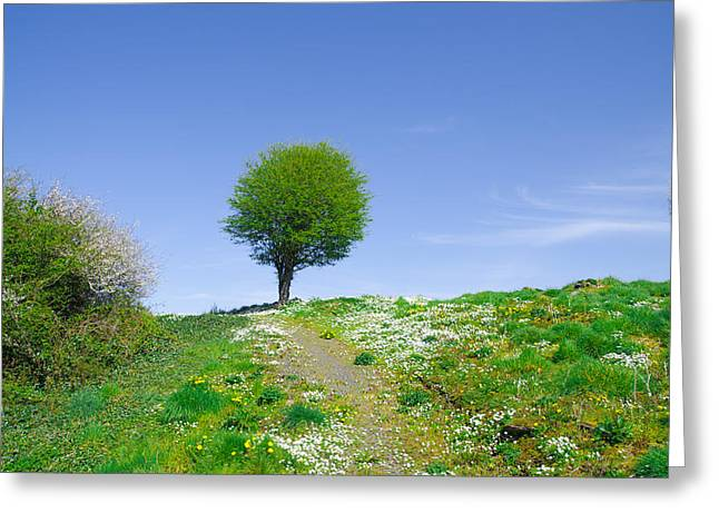 Sligo Greeting Cards - Irish Spring Greeting Card by Bill Cannon