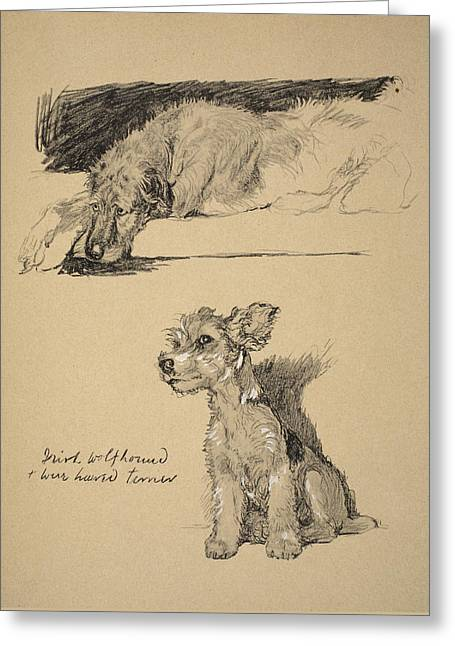 Irish Wolfhound And Wire Haired Terrier Greeting Card by Cecil Charles Windsor Aldin