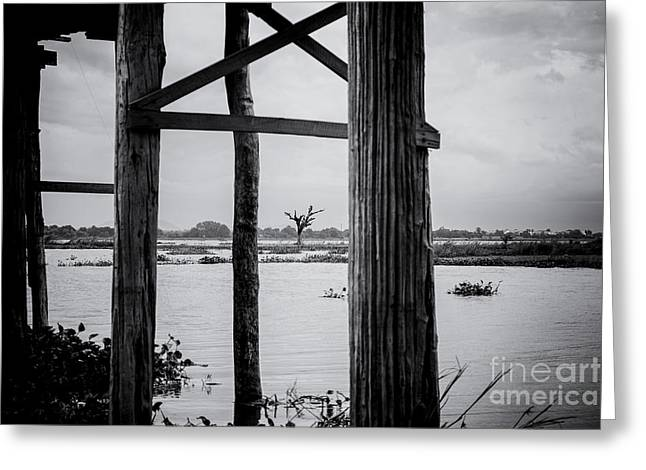 River Scenes Greeting Cards - Irrawaddy River Tree Greeting Card by Dean Harte
