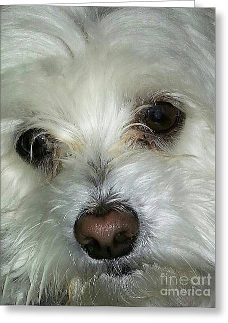 Irresistible Greeting Cards - Irresistible Chloe Greeting Card by Emmy Marie Vickers