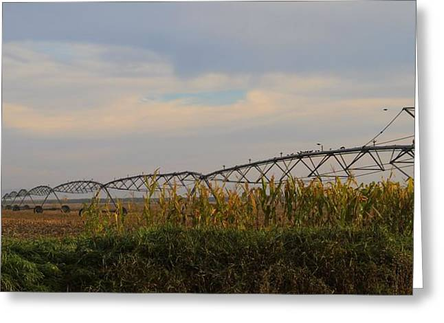The Cornfield Greeting Cards - Irrigation On The Farm Greeting Card by Dan Sproul
