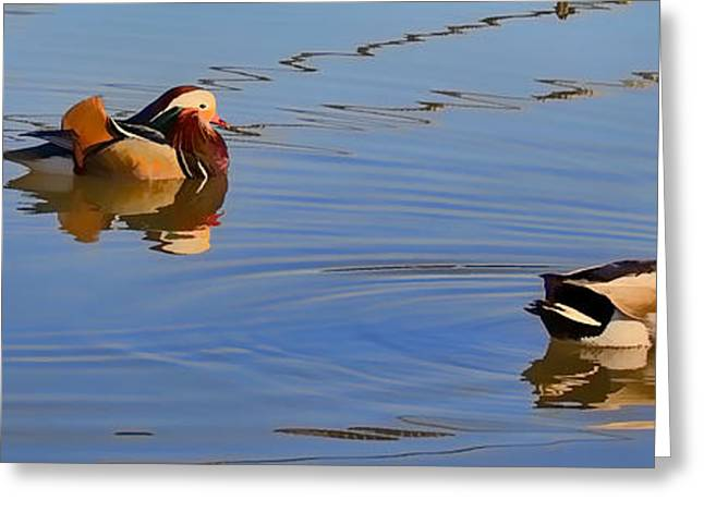 Anatinae Greeting Cards - is it a duck  by Leif Sohlman Greeting Card by Leif Sohlman