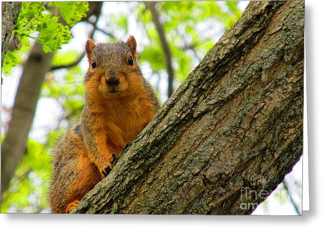 Is It Alright To Have Some Acorns ? Greeting Card by Tina M Wenger