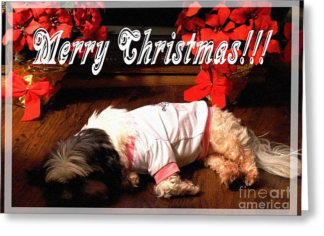 Lazy Red Dog Greeting Cards - Is it Christmas yet Greeting Card by Barbara Griffin