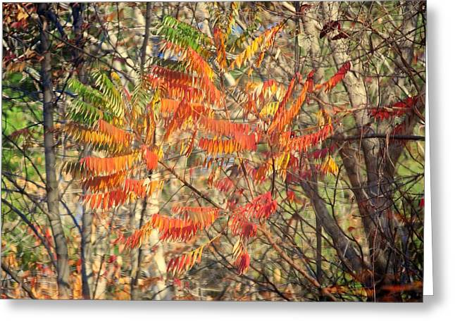 Oak Creek Greeting Cards - Is it Live or is it Memorex Greeting Card by Frozen in Time Fine Art Photography