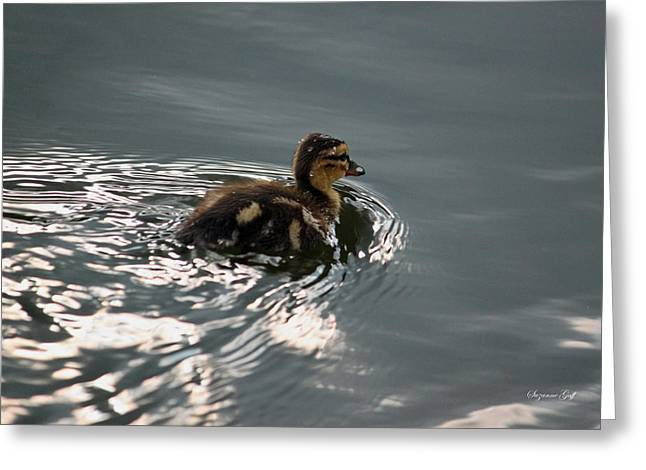 Ducklings Greeting Cards - Is Mama Watching Greeting Card by Suzanne Gaff