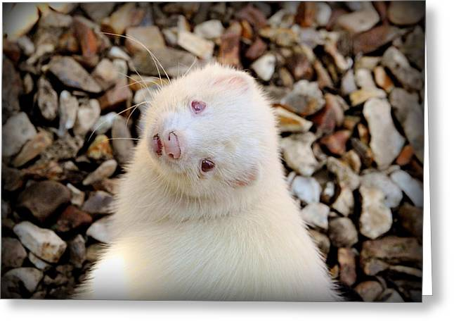 White Ferret Greeting Cards - Is The Weather Good Up There? Greeting Card by Nigel Espley