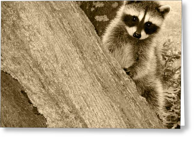 Little Critters Greeting Cards - Is This My Good Side Greeting Card by Kym Backland