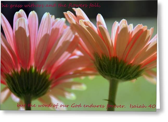 Isaiah Greeting Cards - Isaiah 40 8 Gerber Daisies Greeting Card by Lisa Wooten