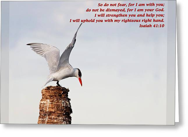 Tern Greeting Cards - Isaiah 41 10 Greeting Card by Dawn Currie