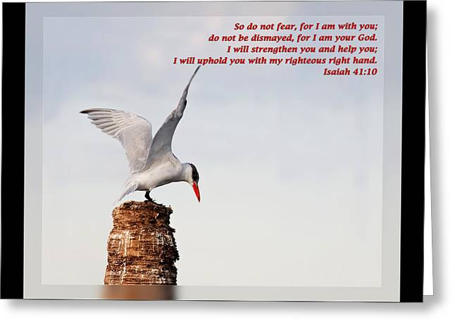 Thank You Greeting Cards - Isaiah 41 10 Greeting Card by Dawn Currie