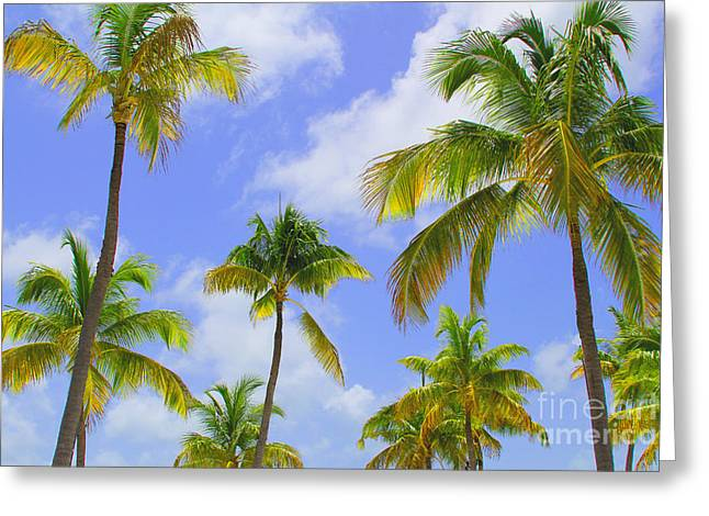 Coconut Palm Tree Greeting Cards - Isla Palms Greeting Card by Carey Chen
