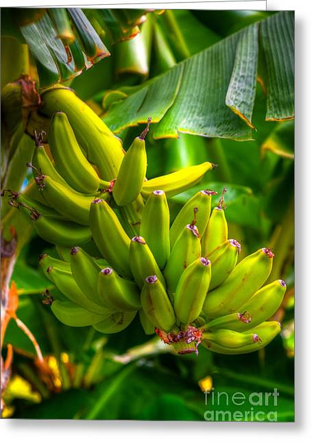 Banana Plants Greeting Cards - Island Bananas Greeting Card by Kelly Wade
