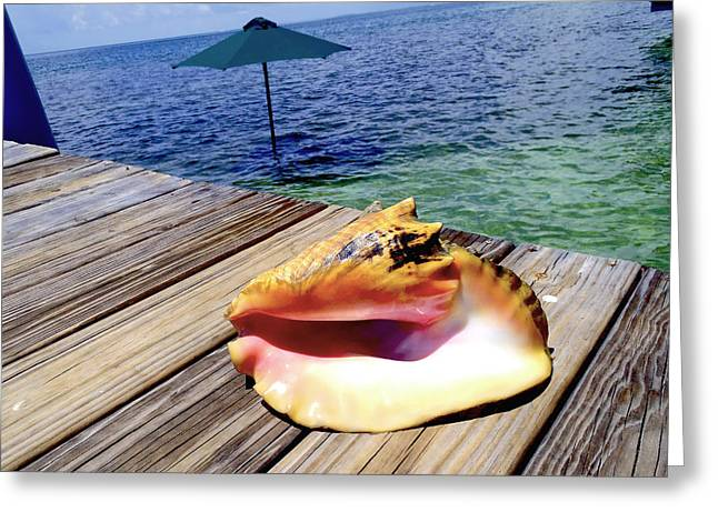 Conchs Greeting Cards - Island Conch Greeting Card by Carey Chen