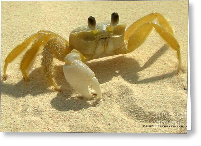 Danielle Perry Greeting Cards - Island Crab Greeting Card by Danielle  Perry