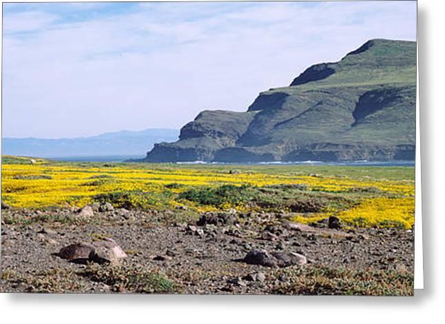 California Ocean Photography Greeting Cards - Island In The Pacific Ocean, Santa Cruz Greeting Card by Panoramic Images
