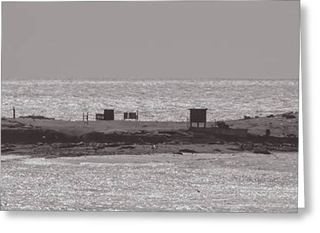 Ano Nuevo Photographs Greeting Cards - Island Greeting Card by John Carey