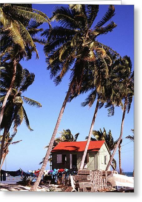 Island Life Greeting Cards - Island Life Greeting Card by Thomas R Fletcher