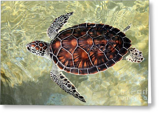 Green Turtle Greeting Cards - Island Turtle Greeting Card by Jimmy Nelson
