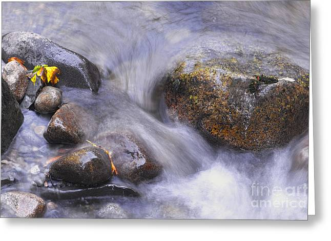 Water In Creek Greeting Cards - Islands in a Stream Greeting Card by Sharon  Talson