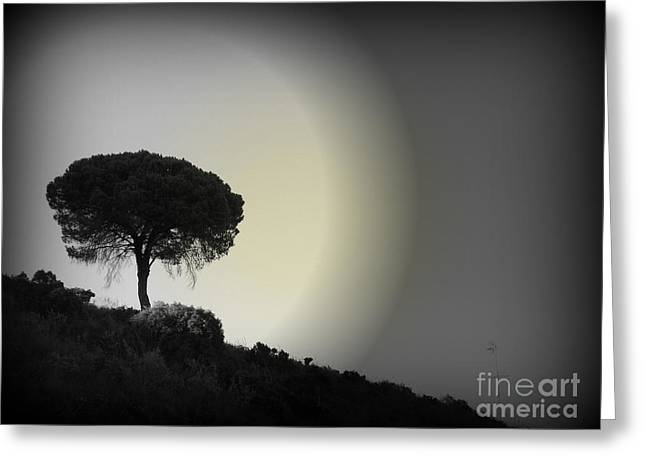 Spotlight Greeting Cards - Isolation tree Greeting Card by Clare Bevan