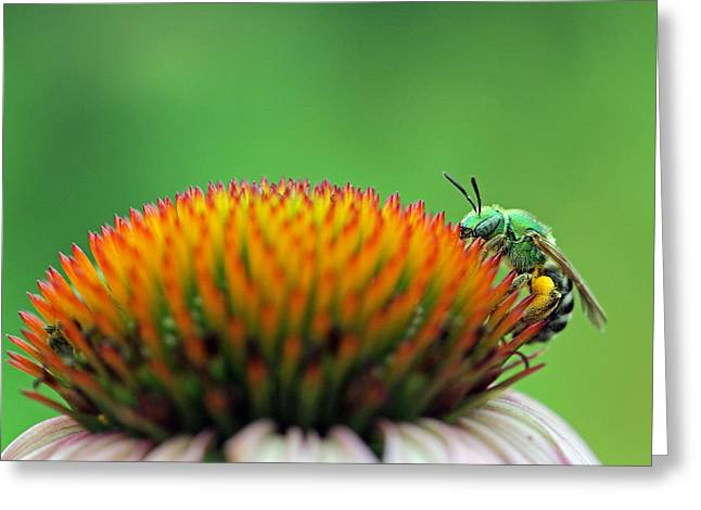 Green Hornets Greeting Cards - It Is A Hard Knock Life  Greeting Card by Juergen Roth
