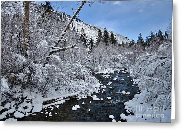 Big Pine Country Greeting Cards - It Is Cold Greeting Card by Marilyn Diaz