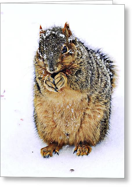 Eastern Fox Squirrel Greeting Cards - It Is Really Cold Greeting Card by Marcia Colelli